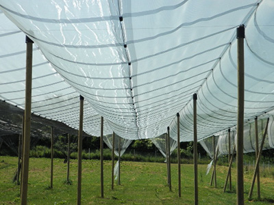 agricultural windbreak netting